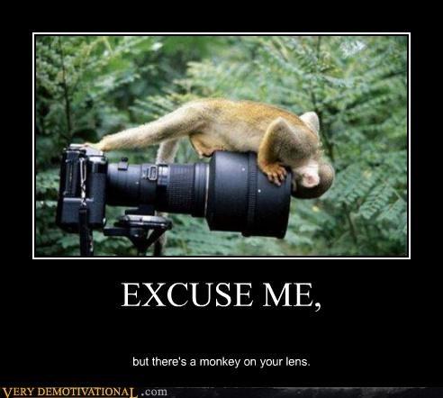animals camera cute jungle lol monkey - 3977739776