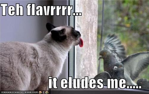 caption captioned cat elusive FAIL flavor licking pigeons tongue window - 3978082816