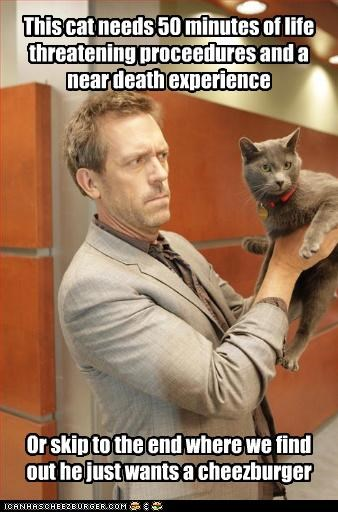 Cats,House MD,hugh laurie,lolcats,lolz,TV