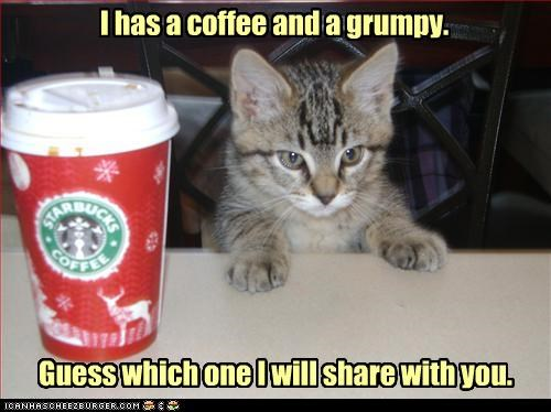 caption captioned cat coffee grumpy guess Hall of Fame kitten sharing which one - 3978501120