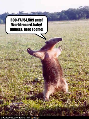 54509 ants accomplished anteater caption captioned eating excited guinness book of records proud world record - 3978792704