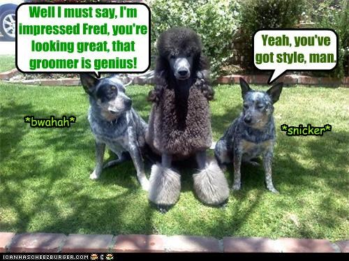 blue heeler fashion genius groomer haircut insulting looking good mean mixed breed new picking on poodle sarcasm style - 3978969600