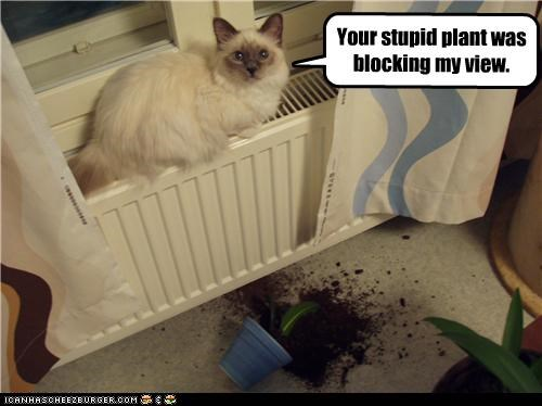 Your stupid plant was blocking my view.