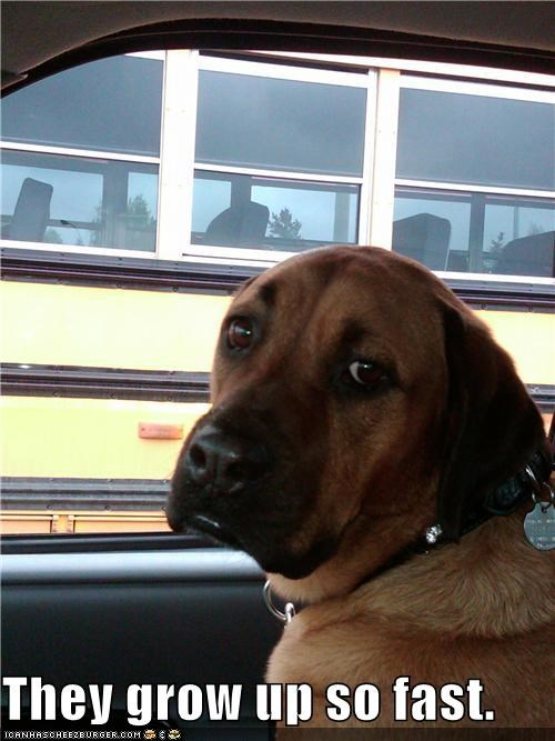 anatolian shepherd first day of school grow up kids nostalgia school bus so fast thinking watching - 3979785984