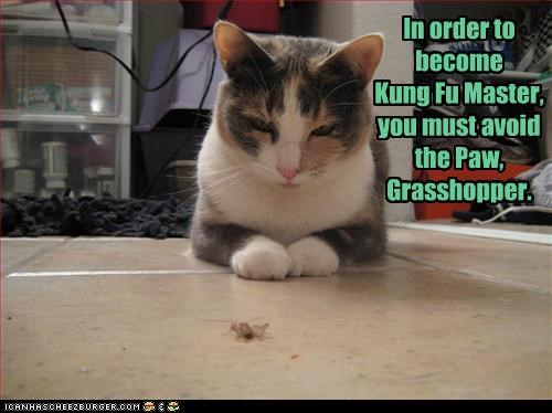 avoid caption captioned cat final challenge grasshopper kung fu literalism the paw training - 3980729344