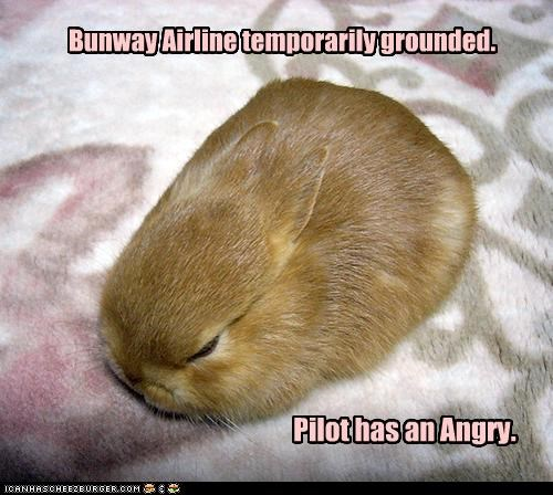 an angry bunny bunway airlines caption captioned grounded pilot temporary - 3980749056