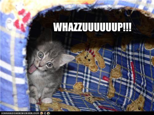 cat derp kitty wazzup - 3981785600