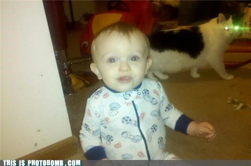 Animal Bomb,baby,cat,cute,frightening,laser eyes,photobomb,Splnter Cell