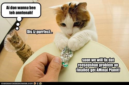 Dis iz purrfect... soon we will fix dat reesepshun problem an finallee get AMinal Planit! Ai don wanna bee teh anntenah!