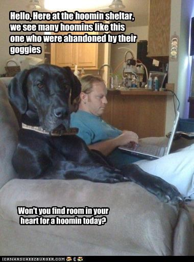 abandonment,great dane,hoomin society,humane society,open your heart,pleading,psa,pun