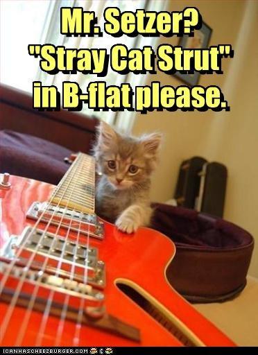 b flat brian setzer caption captioned cat guitar kitten request song stray cat strut title - 3983806976