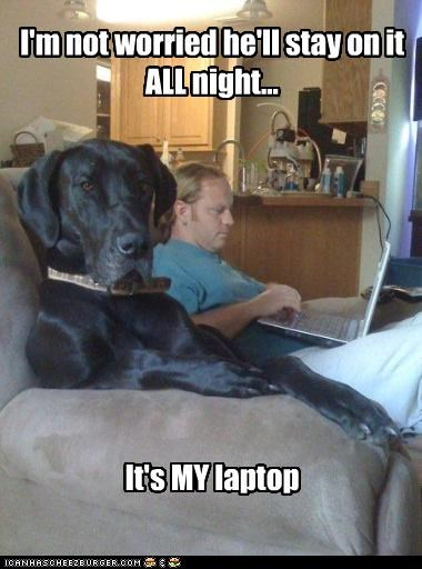 I'm not worried he'll stay on it ALL night... It's MY laptop