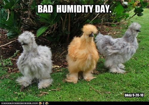 BAD HUMIDITY DAY. bkey 9-20-10