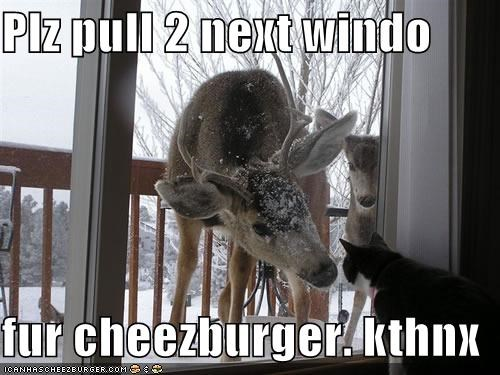 Cheezburger Image 3984426752