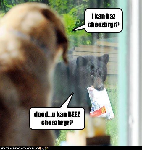 i kan haz cheezbrgr? dood...u kan BEEZ cheezbrgr?