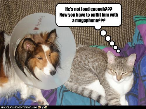 captioned,cat,cone of shame,disbelief,dogs,exasperated,loud enough,megaphone,sarcasm,upset
