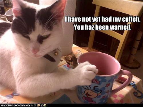 caption captioned cat coffee cranky morning waking up warning - 3985227264