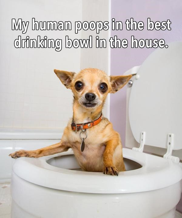 funny dog's shower thoughts