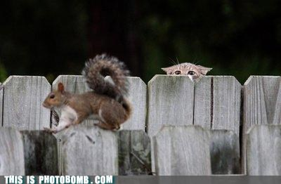 Animal Bomb,animals,circle of life,cute,nature,photobomb,squirrel