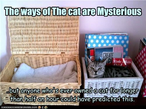 box caption captioned cat cat owners mysterious obvious predictable sleeping ways - 3985733888