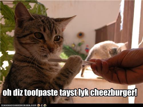 Cheezburger Image 3985876224
