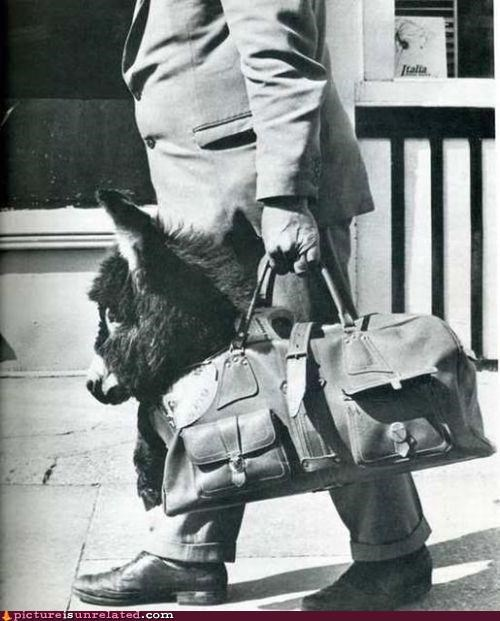 briefcase,costume,donkey,vintage,wtf