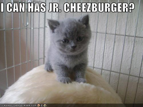 caption captioned cheezburger cute do want i can has jr kitten - 3986349312