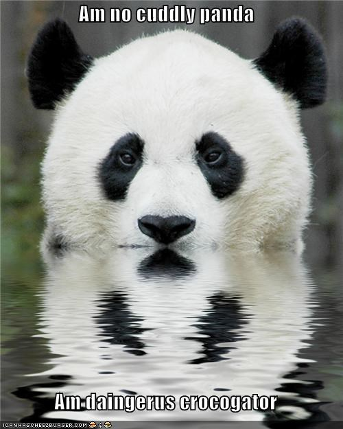 caption,captioned,crocogator,dangerous,denial,disguise,insistence,panda,prowling,swimming