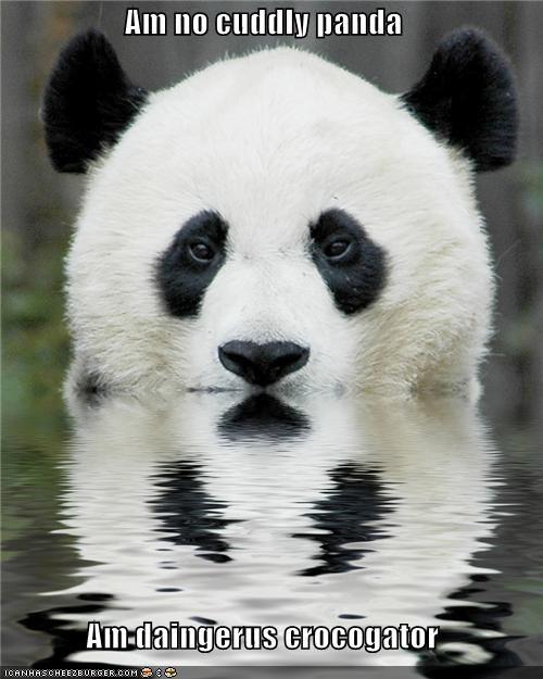 caption captioned dangerous denial disguise panda prowling swimming - 3986416384