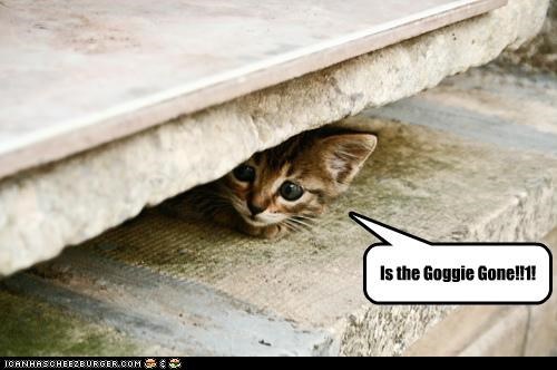 caption captioned cute goggie gone hiding kitten question tiny - 3986440448