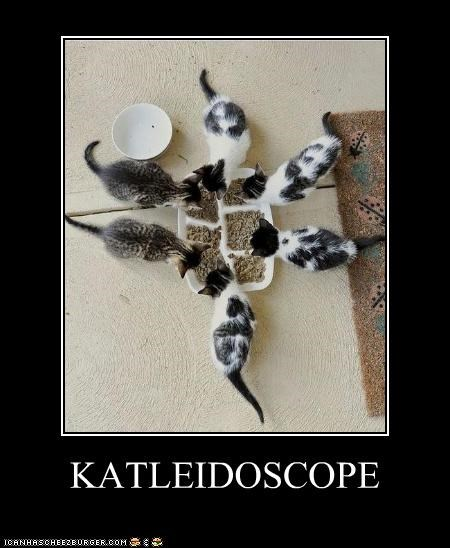 caption,captioned,cat,feeding,kaleidoscope,kitten,pun,six