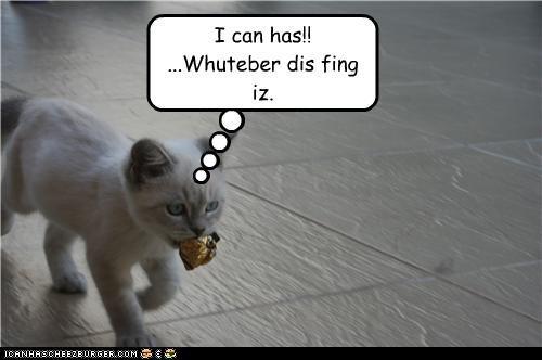 Cheezburger Image 3986594048