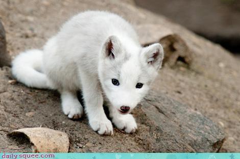 fluff fox white - 3986683136