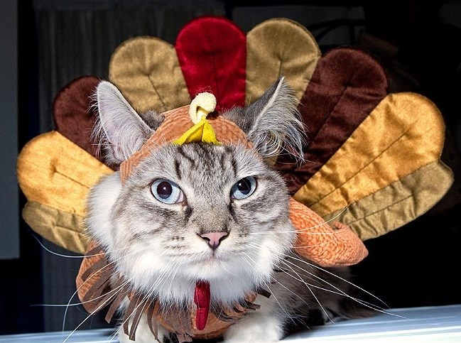 a funny list of cats and dogs in thanksgiving get up