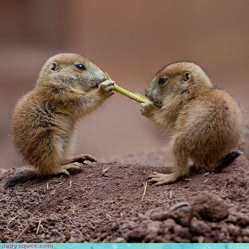 chipmunks off-kilter cute Om Nom Monday - 3986694912