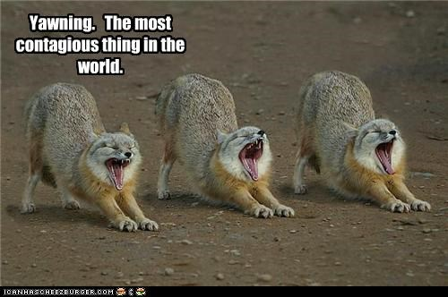 Yawning The Most Contagious Thing In World
