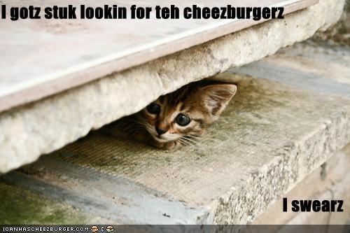 Cheezburger Image 3987511040