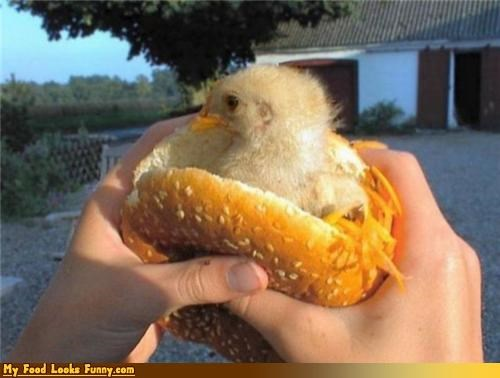 alive,bun,burgers and sandwiches,chick,chicken,chicken sandwich,fillet,its alive,sandwich