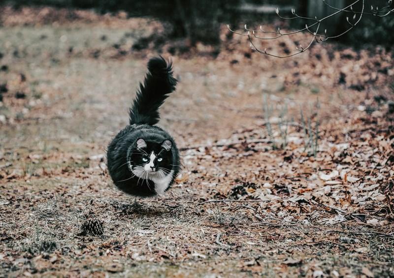 animals turn to balls
