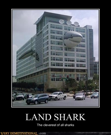 LAND SHARK The cleverest of all sharks