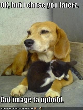 beagle chase cuddling image kitten love mixed breed pretending puppy upholding appearances