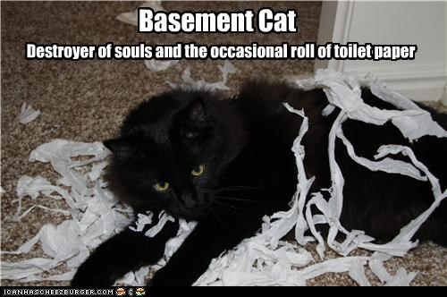 basement cat,caption,captioned,cat,destroyer,occasionally,souls,toilet paper