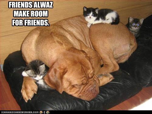 caption captioned cat cuddling dogs friends friendship kitten make room sharing sleeping - 3988931072