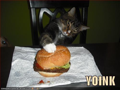 Cheezburger Image 3989304832