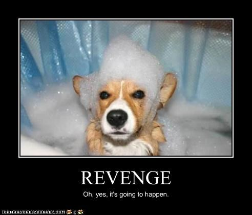 bath,bubbles,corgi,going to happen,inevitability,revenge,soap,upset