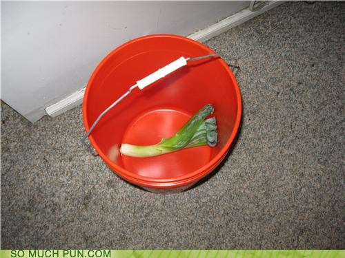 bucket fix leaky leek lettuce vegetables