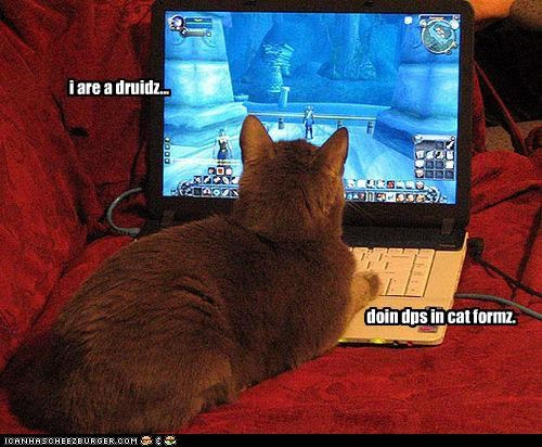 i are a druidz... doin dps in cat formz.