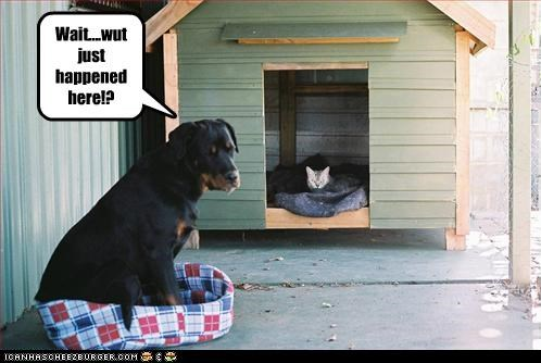 cat cat bed confusion dog house Hall of Fame rottweiler switching places what happened