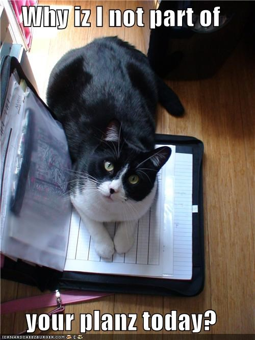 caption captioned cat interrupting kitten eyes planner question today Why Not - 3991040512