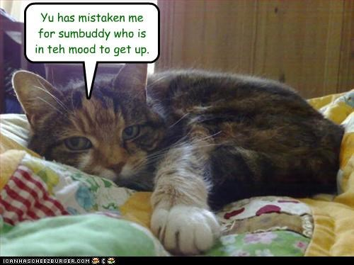 caption,captioned,cat,get up,mistake,mistaken,mood,someone else